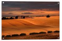 last light over the wheat fields, Acrylic Print