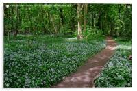 Chalkney Wood in Springtime, Acrylic Print