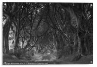 The Dark Hedges, Acrylic Print