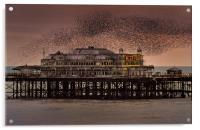 West Pier Starlings, Brighton, Acrylic Print