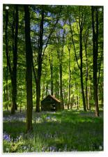 Wild Wood, Acrylic Print