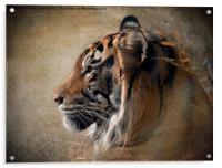 Tiger Portrait, Acrylic Print