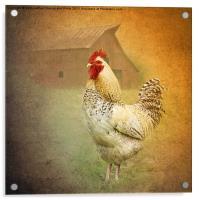 Barnyard Boss, Acrylic Print