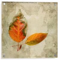 A Touch of Autumn #1, Acrylic Print