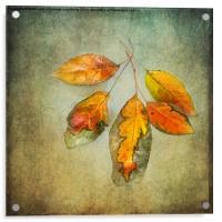 Five Autumn Leaves, Acrylic Print