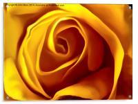 Opening Rose Bud, Acrylic Print