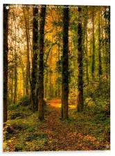 Autumn Woodland Walk, Acrylic Print