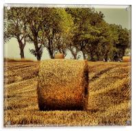 Hay Roll, Acrylic Print