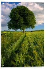 Barley Field & Oak Tree,Somerset, Acrylic Print