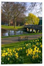 Weston Park, Sheffield, Acrylic Print