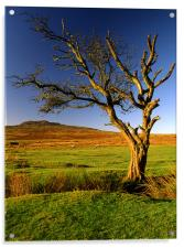 Dead Tree on Dartmoor, Acrylic Print