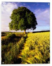 Oak and Barley, Acrylic Print