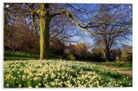 Sheffield Botanical Gardens in Spring, Acrylic Print