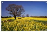 Rapeseed field & Tree, Derbyshire, Acrylic Print