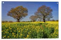Rapeseed field & Trees, Derbyshire, Acrylic Print