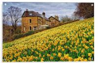 Field of Daffodils, Acrylic Print