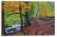 Rivelin Woodland Walk, Acrylic Print