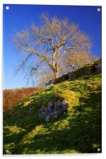 Lone Tree Above Cave Dale , Acrylic Print