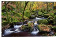 Autumn Colours in Padley Gorge , Acrylic Print