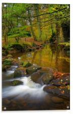 Porter Brook Falls in Endcliffe Park , Acrylic Print