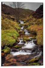 Looking up Blackden Clough , Acrylic Print