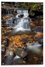 Lumsdale Waterfalls with Autumn Leaves , Acrylic Print