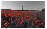 Train of Poppies , Acrylic Print