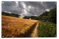 Barley Fields and Footpath, Eckington             , Acrylic Print