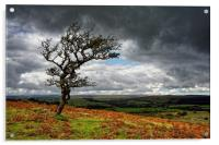 Dark Clouds over Combestone Tor                   , Acrylic Print