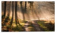 Woodland Light, Acrylic Print