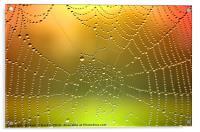 Spider Web Dew Drops   [ Enhanced], Acrylic Print
