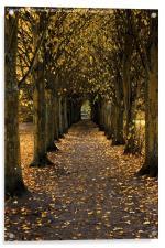 Autumn Avenue, Acrylic Print