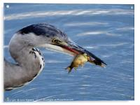 Supper Time                             , Acrylic Print