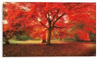 Reddy, Acrylic Print