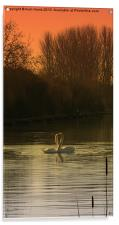 Love Birds, Acrylic Print