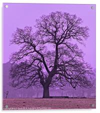 Tree on a winters morning, Acrylic Print