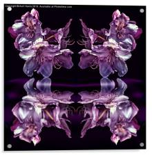 Reflective pink rhododendron, Acrylic Print