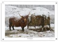 A winter feast, Acrylic Print