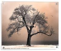 By the Lake, Acrylic Print