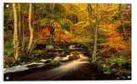 Autumn Glory in Padley Gorge, Acrylic Print
