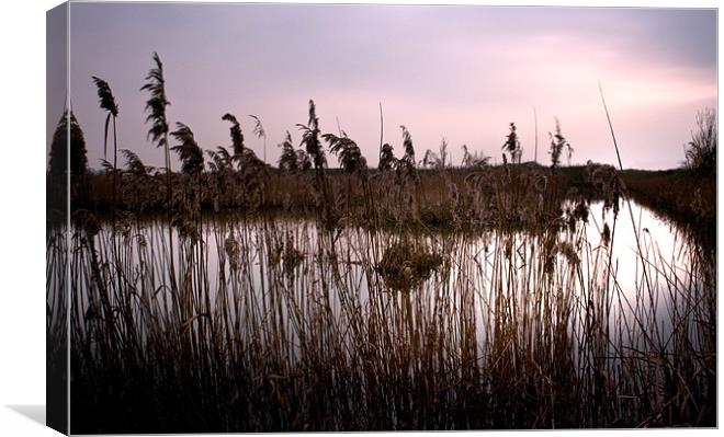 Fenland waterways near Ely. Now a nature reserve Canvas print by Terry  Pearce