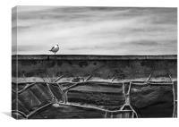 Seagull on Robben Island, Canvas Print