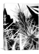 Spikey Cactus, Canvas Print
