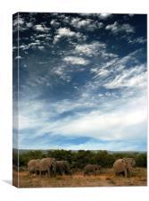 Elephants at Shamwari!, Canvas Print