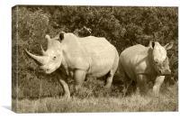 White Rhino and baby, Canvas Print