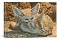 Fennec Foxs, Canvas Print