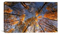 Autumn Gold, Canvas Print