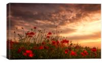Poppy Sunset, Canvas Print