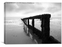 Grey Groyne, Canvas Print