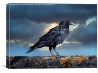 Rook on the Roof., Canvas Print
